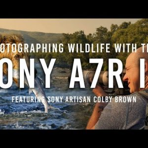 Sony a7RIV - The Best Camera for Wildlife Photography?